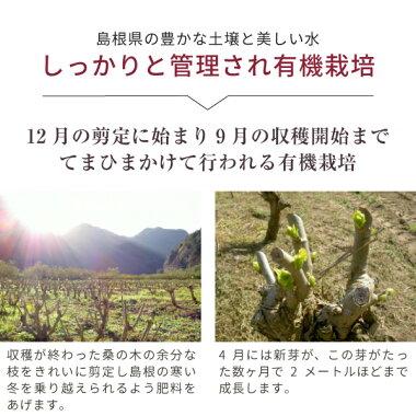 nichie桑の葉粉末青汁サプリオーガニック国産島根県産500g8p5