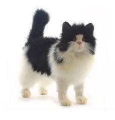 【HANSA】ぬいぐるみ白黒ネコ40cm