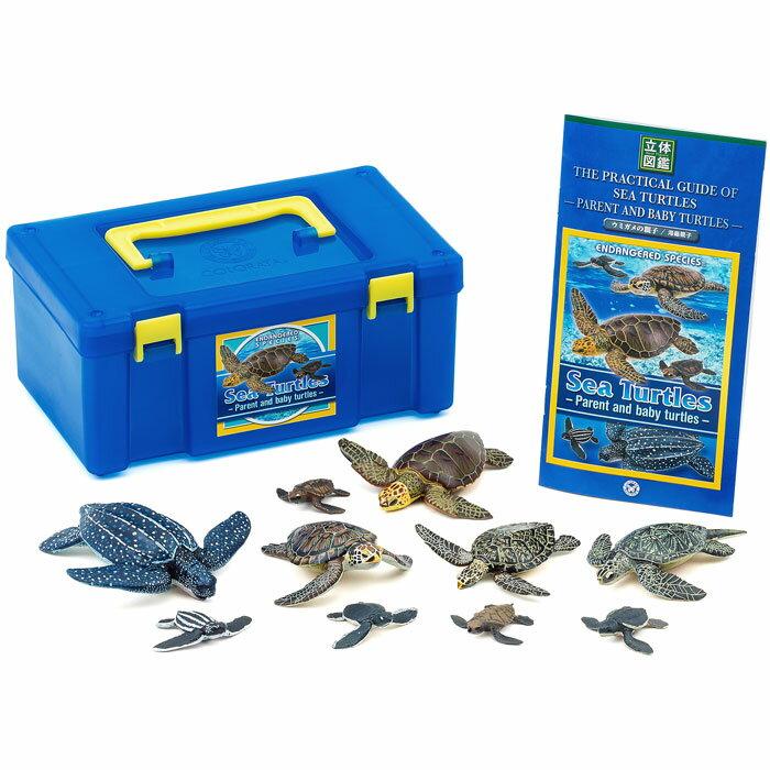立体図鑑 ウミガメの親子ボックス