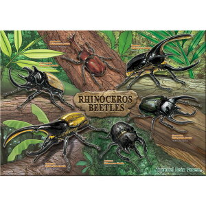 [Insect Museum Jigsaw Beetle A3 size / 720 pieces] Biological game