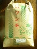 新米【29年度産】送料無料【生産者直売】 岐阜の米《代表品種》ハツシモ100% 白米27kg 世界農業遺産認定地域(清流長良川上中流域)にて栽培しております。