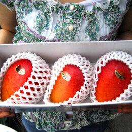 【宮古島ヤマノパリ農園】宮古島産完熟アップルマンゴー1kg(B級品)【gurume0619】