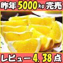 食べきりサイズが人気!秀・優混合!和歌山 八朔10kgSサイ...