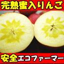 完熟りんごはおいしさが違う!長野 丸茂ファーム 蜜入りサンふじりんご3kg6〜1…