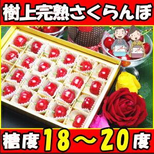 さくらんぼ スーパー プレゼント