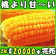 最高糖度20度以上!桃より甘くて美味!長野信濃町 県外不出のとうもろこし(品種めぐみ) 2Lサイズ10本セット(3.5〜4.5kg以上)トウモロコシ とうもろこし 送料無料 とうもろこし とうもろこし 生