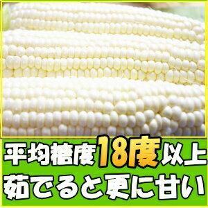 とうもろこし ピュアホワイト 生で食べれる 白いとうもろこし 糖度18~19度 香川 三豊産 トウモロコシ 2L-Lサイズ 混合 5本入り