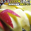 りんご 訳あり サンふじ 口コミ2000件 糖度 噂のりんご