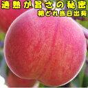桃 送料無料 適熟の桃 お盆 お供え 長野 2kg 6-10玉 贈答用
