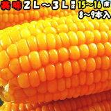 とうもろこし 送料無料 生で食べれる おおもの スイートコーン 香川 三豊産 トウモロコシ 2L〜3Lサイズ 8-9本入り 父の日 お中元 父の日プレゼント 父の日ギフト 食品 食べ物 内祝 御中元 2021 6月
