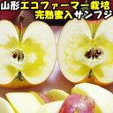 りんご 蜜入り ふじ サンふじ 糖度 減農薬 エコファーマー...