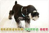 CRAZYBOOパピーセットCRAZYBOO / クレイジーブー犬服 / 犬の服/ ドッグウェア