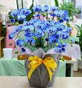 胡蝶蘭 青 光触媒【造花】k5-sミディ「ブルー(青色)」5本立て