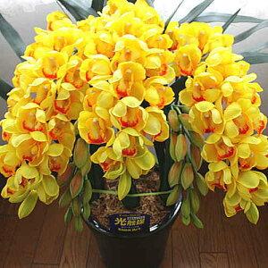 シンピジューム黄色3本立ち光触媒【造花】本物そっくり花ギフト