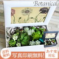 ボタニカル多肉エアープランツ造花