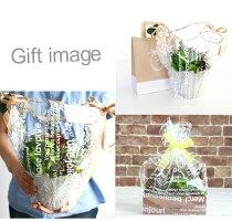 送料無料ボタニカルLアレンジ陶器ブリキ多肉植物エアープランツ造花グリーン手入れ不要で一生持つ♪のアーティフィシャルフラワー癒しのインテリアエケベリアグリーンネックレスティランジア