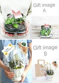 送料無料ボタニカルMアレンジ陶器ブリキ多肉植物エアープランツ造花グリーン手入れ不要で一生持つ♪のアーティフィシャルフラワー癒しのインテリアエケベリアグリーンネックレスティランジア10P18Jun16