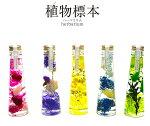 ハーバリウム植物標本 選べるカラー5色 結婚祝い プレゼント ギフト 誕生日 記念日[新築祝い グッズ]