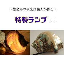 夜光貝ランプ(中)