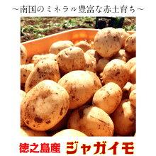 ジャガイモ5kgじゃがいもバレイショ馬鈴薯新じゃがニシユタカ鹿児島徳之島