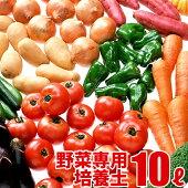 野菜の実りの培養土10L大郷屋オリジナルブレンド培養土植物の土
