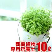 観葉植物の実りの培養土10L大郷屋オリジナルブレンド培養土植物の土