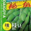 枝豆 秘伝 1dl入り 【野菜種】