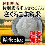 特別栽培米さくらこまち米精米5kg減農薬・減化学肥料/特別栽培米/使いやすい5kg袋/おにぎりに最適