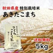 【令和2年度産】【送料無料】あきたこまち/特別栽培米さくらこまち米/精米/5kg/減農薬・減化学肥料/特別栽培米/おにぎりに最適