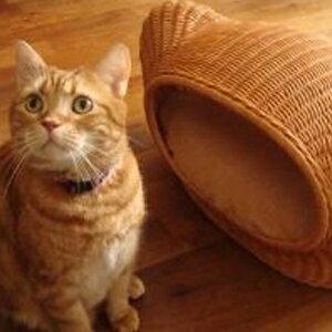 【PET】【株式会社シンシアジャパン】ラタンキティハウス【ハニー】 JAN:4988269700373【W】