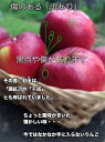 りんご 4.5Kg 訳あり 青森県 紅玉 りんご 4.5Kg 送料無料 りんご 紅玉 りんご ご家庭用 CA貯蔵 糖度保証 クール便配送可 当店のりんごは糖度保証 昔懐かしいりんご お菓子作りに最適 3