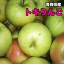 特別セール 訳あり 送料無料 青森県産 トキ りんご 10kg サイズばらばら お試し