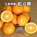 【送料無料】広島県産紅八朔 2Lサイズ 約5kg 2100円...