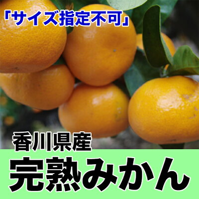 Buy Delicious Japanese Mandarin Orange for a Low Price