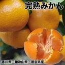 みかん 10kg 送料無料 訳あり 香川県産 または 和歌山