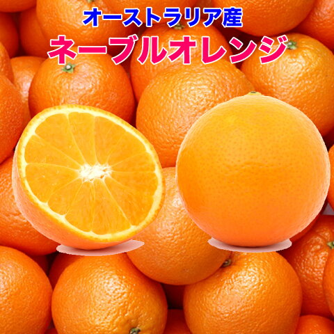 オーストラリア産 ネーブルオレンジ 18kg 糖度保証 88玉