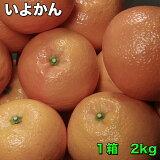 訳あり 送料無料 愛媛県産いよかん 糖度保証 サイズ指定不可 約2kg 580円 3箱以上で送料無料 おまけ付