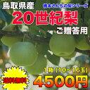 【送料無料】鳥取県産20世紀梨 ご贈答用 1箱 約5kg(10〜16玉入)橋本さんちの梨シリーズ【RCP】