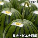 【送料無料】高知県産ルナピエナ西瓜 約1.5kg以上 (夜空...