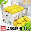 愛媛県産 ニューサマーオレンジ ご家庭用5kg