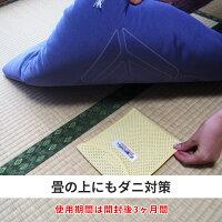 畳の上にもダニ対策