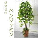 人工観葉植物 ベンジャミン   1.5m 大型 インテリア 造花 フェ...
