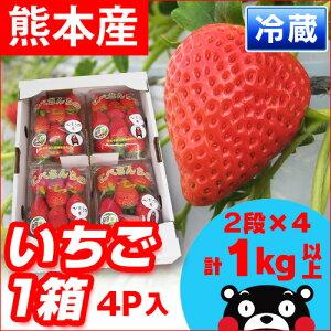 果実大きめ。酸味が少なく、ジューシーで爽やかな甘さが魅力の…■熊本県産 いちご■ 丹部さん...