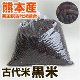 古代米黒米