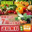 ≪送料無料≫ 九州 熊本産 定番野菜 7品以上保証 安心 くまもとミニ野菜セット
