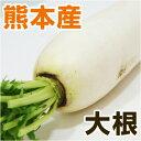 ■ 熊本県産 大根 / だいこん ■ 1本 【野菜セット同梱...