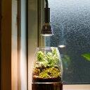 植物育成LED PlantLight5W-w 白色電球E17(SUN-5W-W)(電球のみ) 植物育成ライト テラリウム アクアリウム 拡散光
