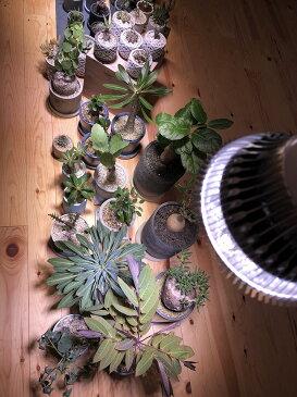 植物育成LED PlantLight18W 白色クリップタイプ(SUN-18W)+(プラントクリップA)観葉植物 植物栽培ライト