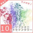 【訳あり】10g ラメ付き♪ ソフトミニ ドライフラワー 全5色 【10/27入荷】