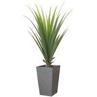 【送料無料】【グリーン・インテリア用観葉植物】メキシカンアロエプラント(L)